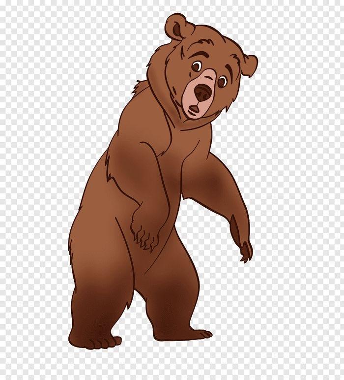 Медведь бурый картинка для детей (4)