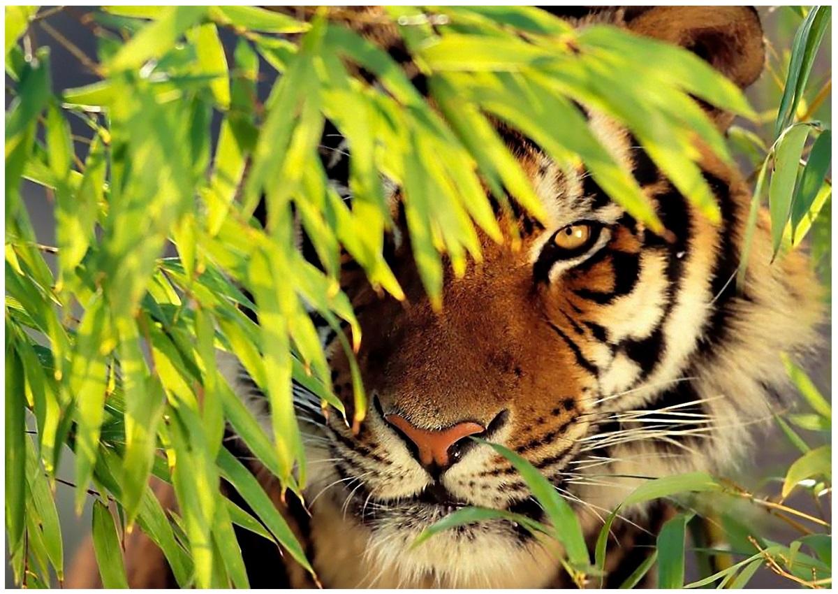 Тигрята на рабочий стол картинки (4)