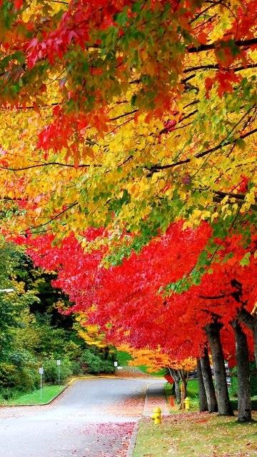 Картинки осень красивые для телефона за 2021 год (14)