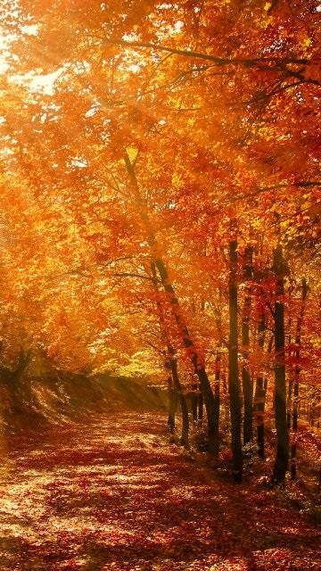 Картинки осень красивые для телефона за 2021 год (15)
