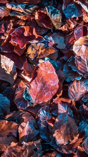 Картинки осень красивые для телефона за 2021 год (16)