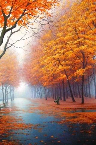 Картинки осень красивые для телефона за 2021 год (20)