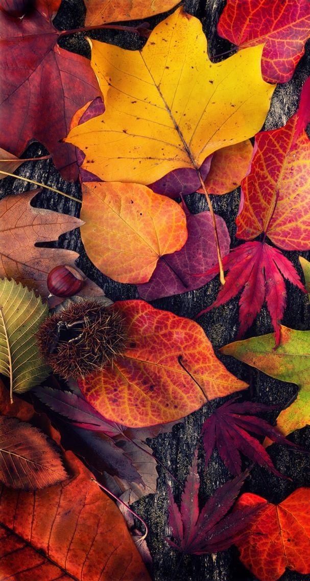 Картинки осень красивые для телефона за 2021 год (4)
