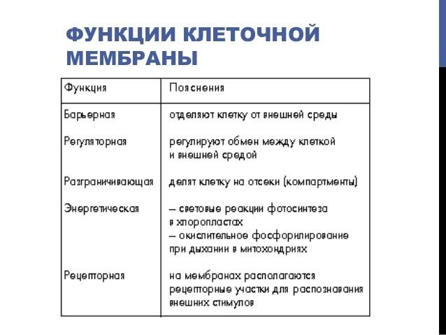функция клеточной мембраны