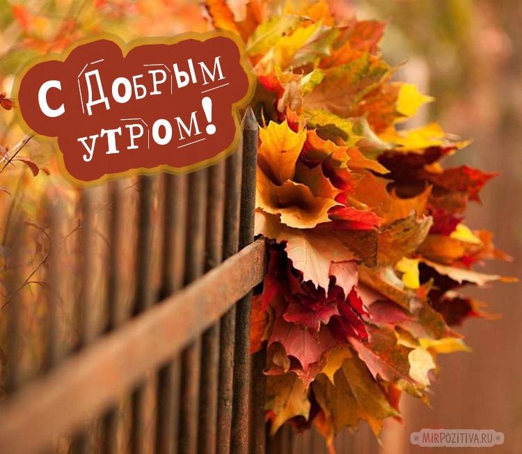 Замечательного утра и прекрасного настроения осенью и в дождь (12)