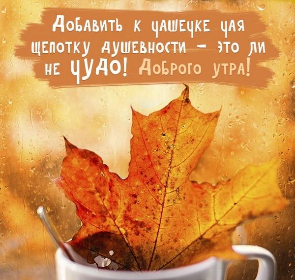 Замечательного утра и прекрасного настроения осенью и в дождь (14)