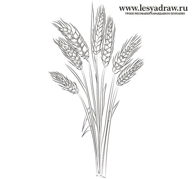 Картинки хлеб для детей нарисованные (23)